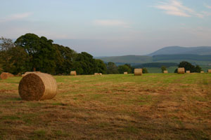 Hay on Cormiston Brae